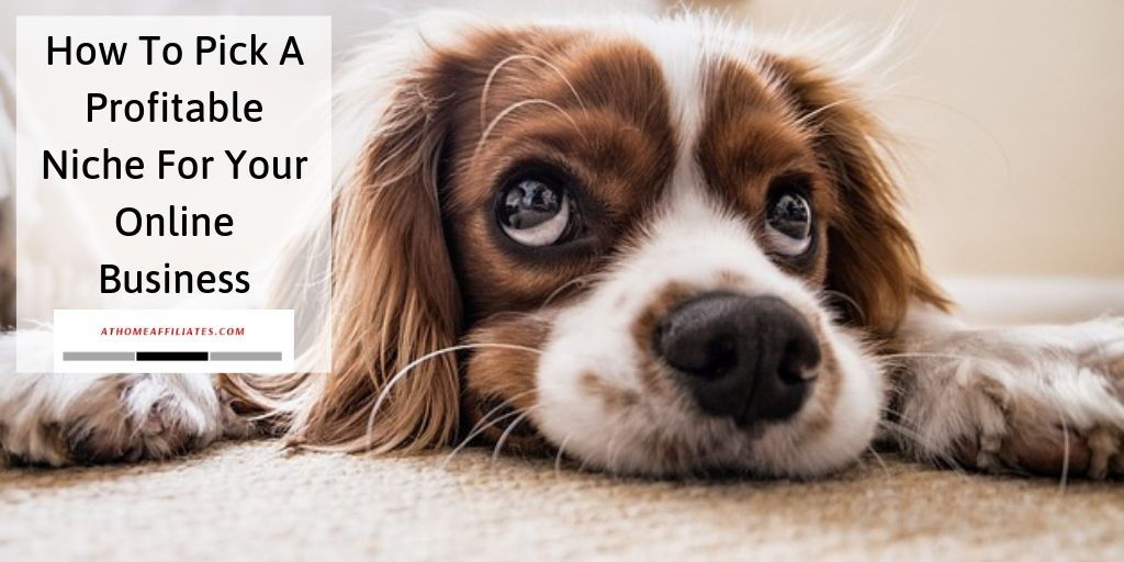 How To Find A Profitable Niche For Your Online Business - Fluffy Dog
